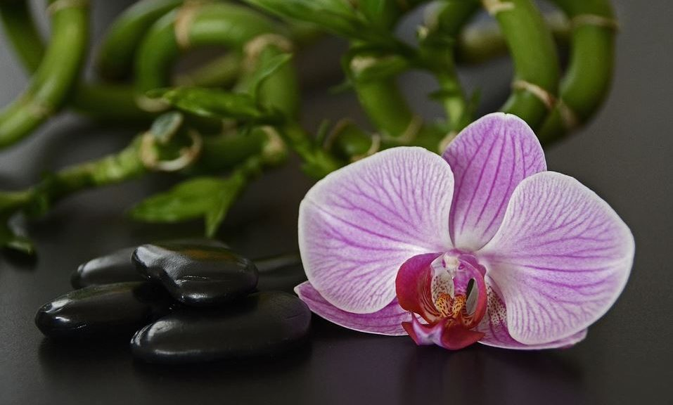 orchid and stones image