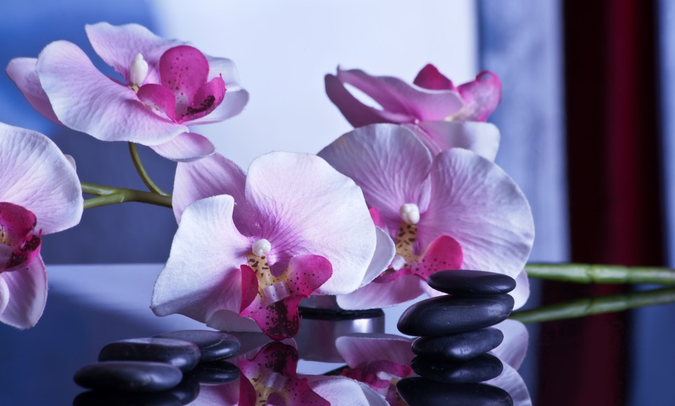 massage orchid and stones